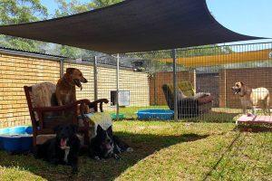 Sofa Garden Kennels at Wingham Pet Motel