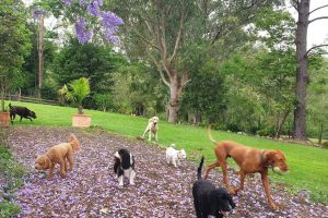 Canine Country Lodge at Wingham Pet Motel