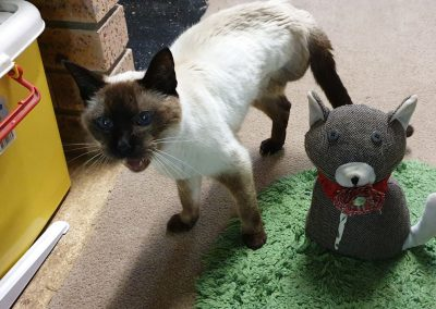 Wingham Pet Motel Cattery
